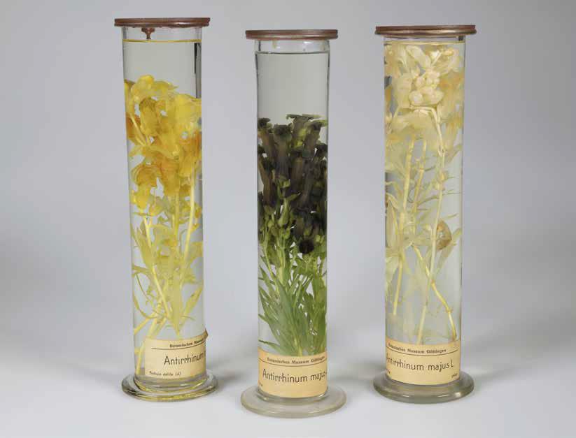 Botanische Nasspräparate Titelbild