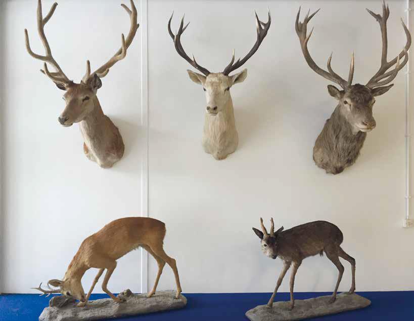 Wildtierwissenschaften Titelbild